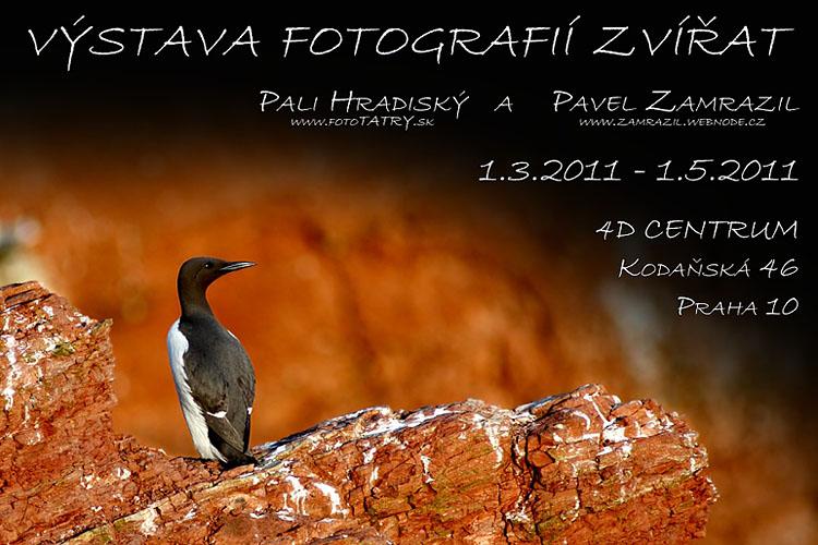 Pali Hradiský a Pavel Zamrazil - Výstava fotografií zvířat